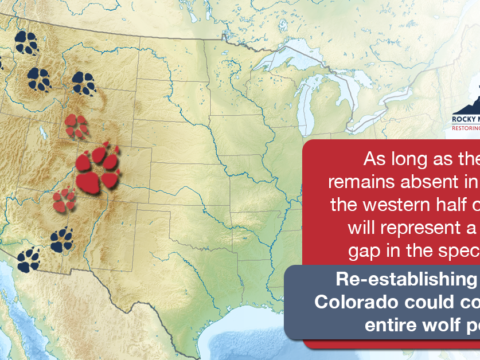 Colorado is the missing link necessary to allow the wolf population to re-establish
